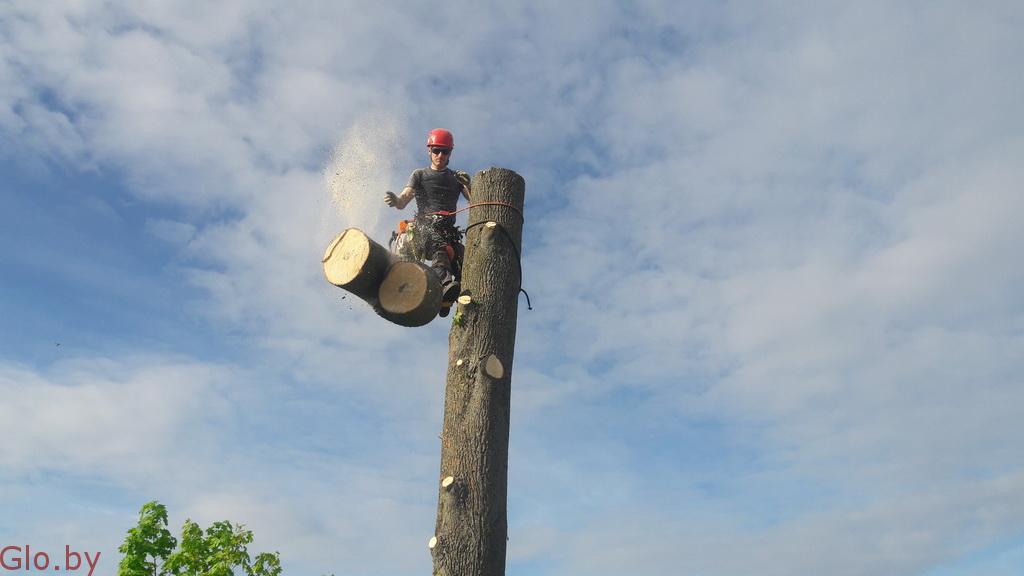 Профессиональное удаление деревьев любой сложности по всей Беларуси