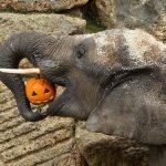 Слоники из Африки