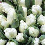 Тюльпаны выгодно оптом в Минске