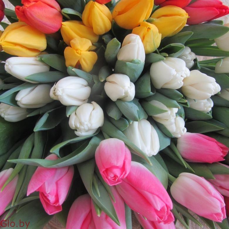 Букеты из элитных тюльпанов к 8 марта, предзаказ