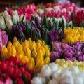 Живые цветы недорого оптом к 8 Марта