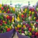 Тюльпаны от производителя надежно и выгодно