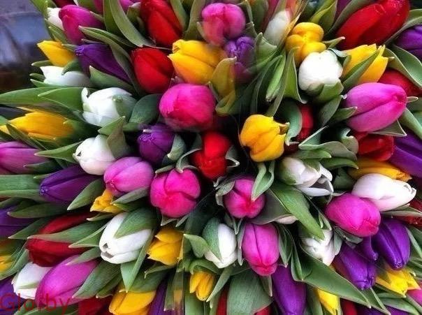 Тюльпаны Экстра класса, выгодное предложение