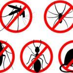 Уничтожение насекомых и грызунов. Дезинфекция, дезинсекция, дератизация