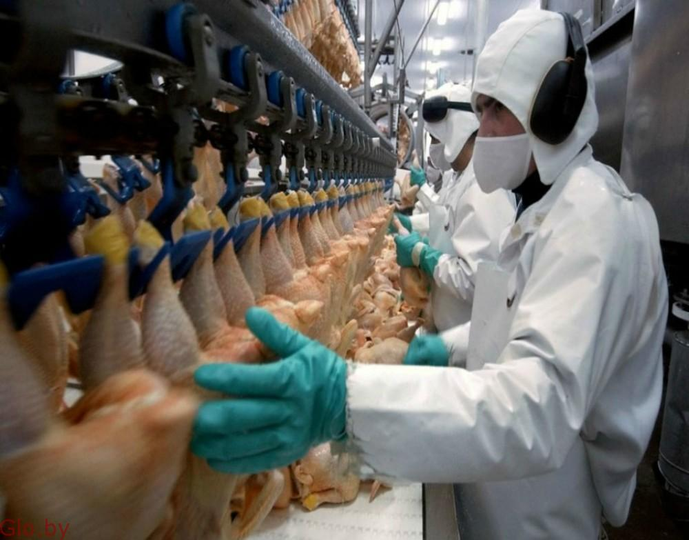 Разнорабочий на куриное производство.