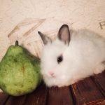 Декоративные кролики, питомник веселый хвостик