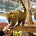 Продается контактный зоопарк с очень быстрой окупаемостью