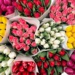 Голландские тюльпаны.
