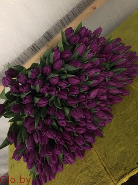 Тюльпаны в Минске от производителя