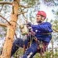 Поможем быстро спилить дерево без ущерба