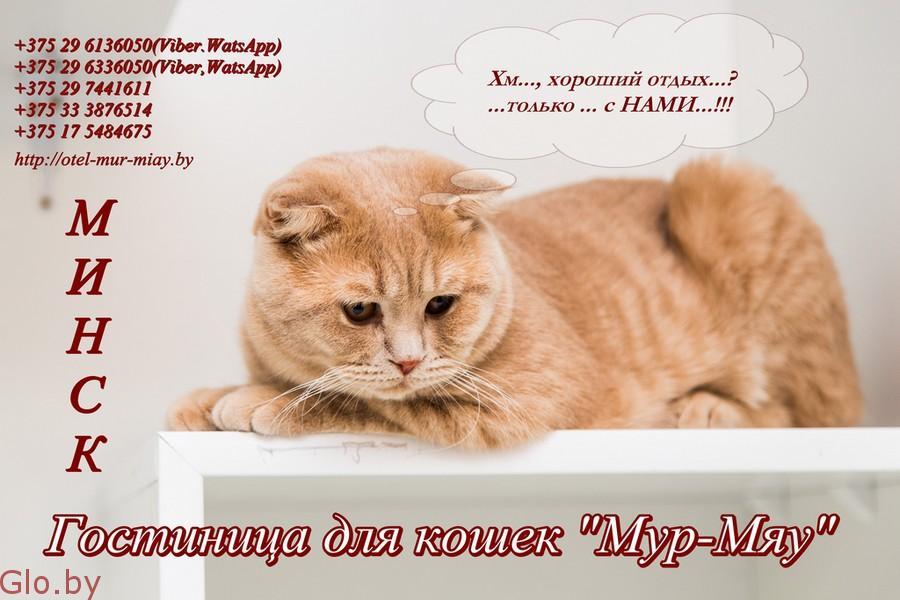 """Гостиница для кошек """"Мур-Мяу"""", Минск"""